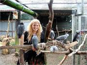 HUGE AMOUNT of AFRICAN GREY PARROTS FOR GOOD HOME